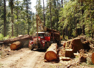 Ministry of Forests, Lands and Natural Resource Operations – Part 4