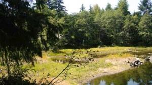 recreation area around BC Hydro's Strathcona Dam