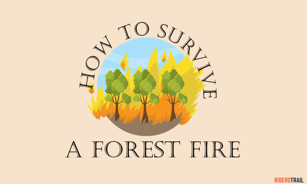 Survival guide How to survive a forest fire while hiking